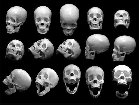 free-skull-photos-preview